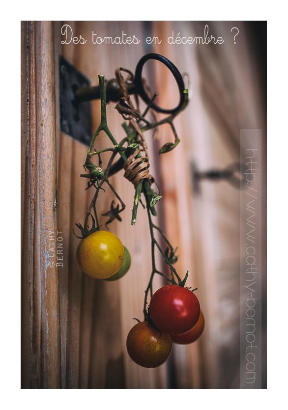 tomate-bio-ecolo-decembre