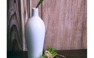 ornithogale des pyrénées, asperge des bois ou aspergette