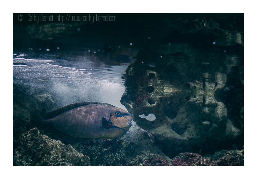 Terrine marine végétale