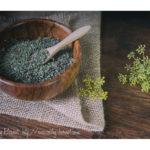 Récolte  des graines de fenouil officinal